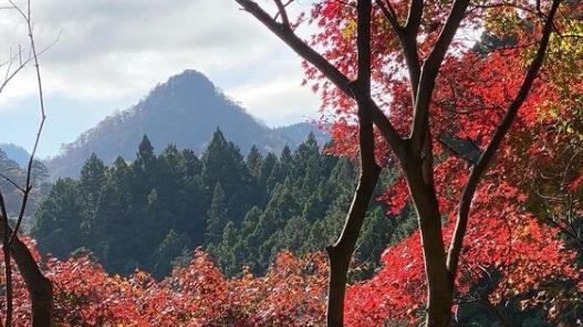 *御岳山の紅葉