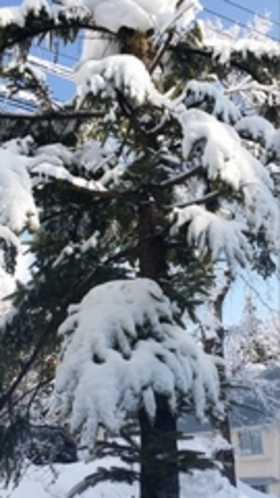 雪の花シリーズ