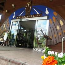 ◆オオムラサキセンター◆ホテルからお車で約20分 昆虫好きのお子様にオススメのスポットです♪