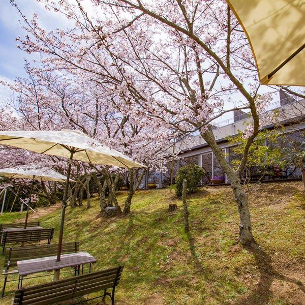 ガーデンと桜