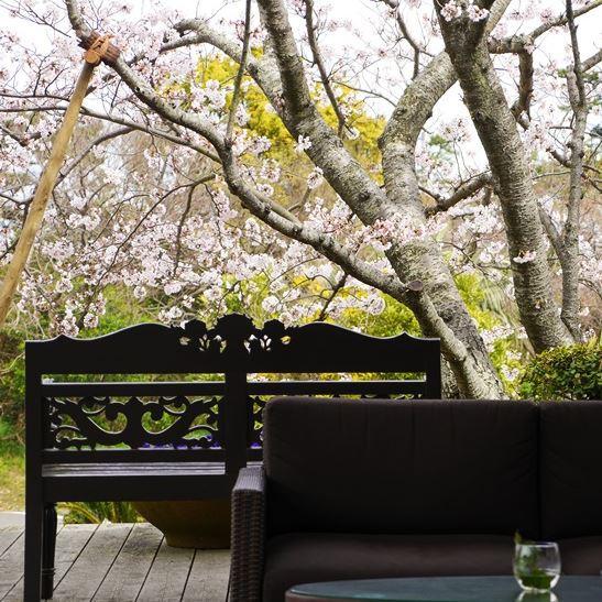 ソファと桜