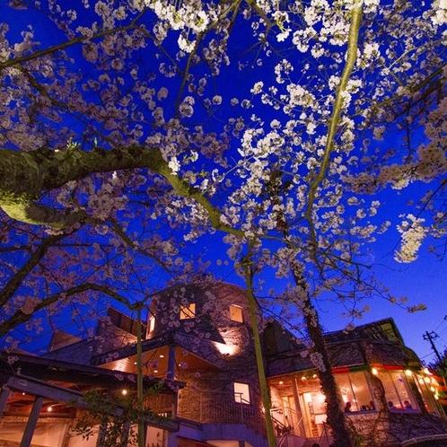夜桜と外観
