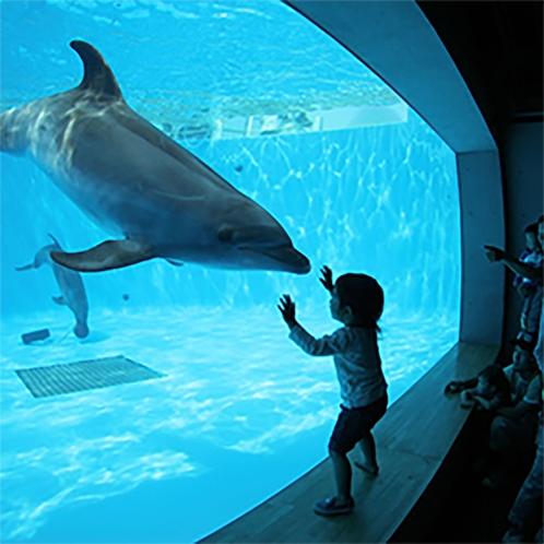 九十九島水族館のイルカ