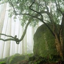 大雲取越 楠の久保