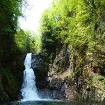 2015年 初夏のがすがしい白布大滝