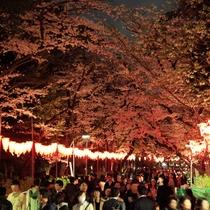 ★上野公園 春