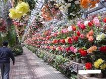 人気の富士華鳥園
