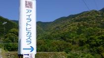 【周辺観光】国の特別天然記念物「アイラトビカズラ」が見学できます。。※4月下旬から5月上旬開花。