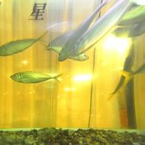 *【館内施設/いけす】獲れたての鮮魚が泳いでます。船保組合のお宿ならではの光景です!