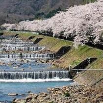 *【周辺】湯河原のゆったり穏やかな流れ。春には、川岸を桜が彩ります。