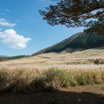 *【周辺】当館から車で約30分。仙石原のすすきは9月下旬~11月下旬が見頃です。