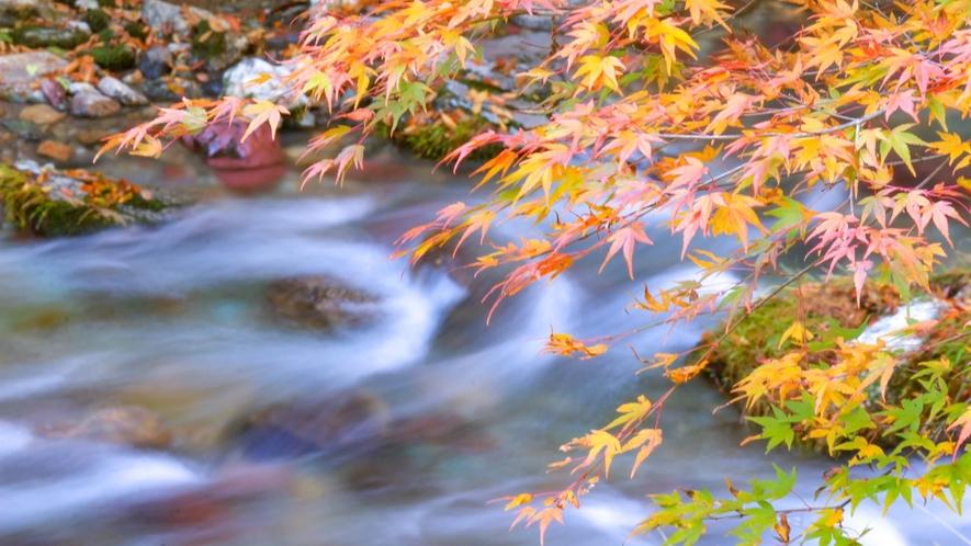 *小田深山の紅葉 紅葉の遊歩道をゆっくり散策。20種類以上の紅葉で彩られます!