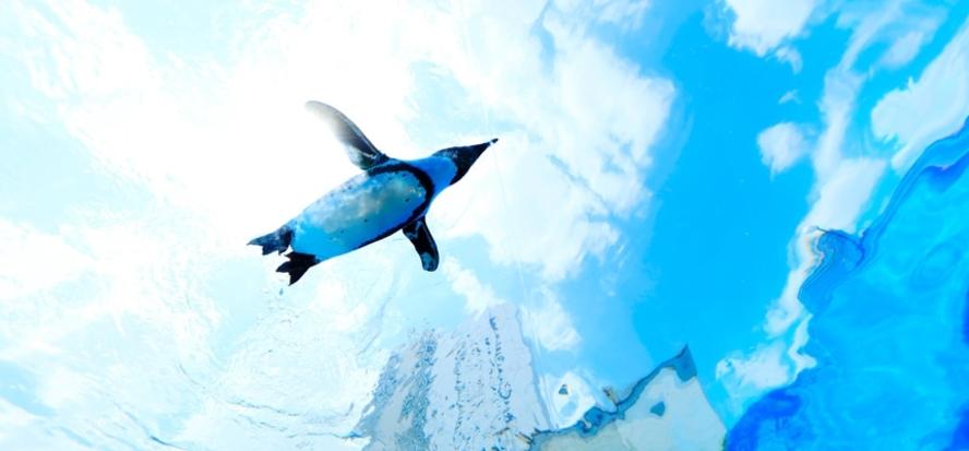 【サンシャイン水族館】都会のビル群を自由に泳ぎ回るペンギンたちに癒されます。