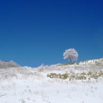 茶臼山高原の冬