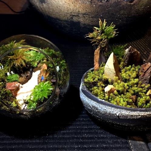 厳選プログラム:小さな自然「テラリウム体験」