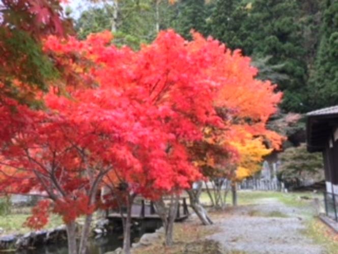 龍泉寺のもみじ(291028)