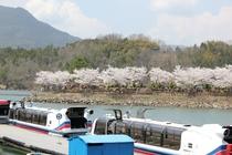 春の遊覧船