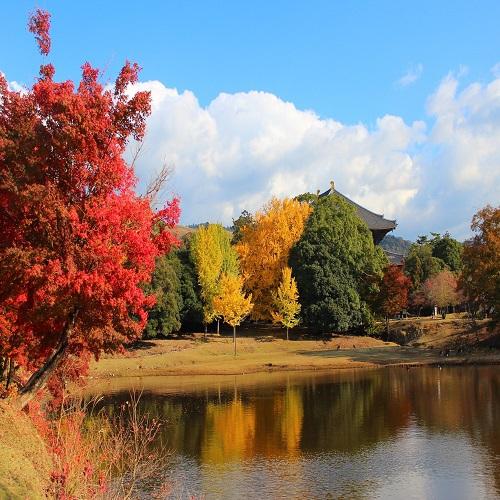 紅葉(奈良公園)