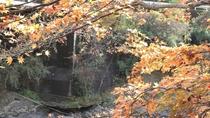 *【当館からの景色】日高川と紅葉