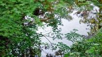 中庭の池には紅葉の影が映ります。