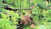 春から秋は野趣溢れる中庭に