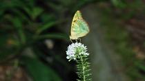 盛夏は様々な昆虫も見られます。