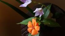 女将が活ける生花が館内を彩ります。