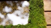 敷地内には様々な苔が自生しております。