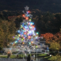 箱根ガラスの森美術館 クリスタルツリー(お車で20分)
