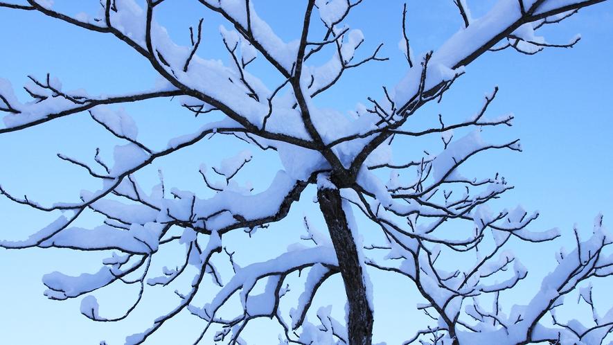 *[冬/雪景色]県内でも有数の豪雪地帯です