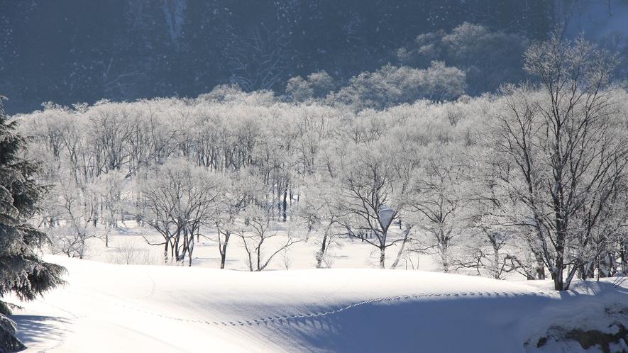 *[冬/雪景色]動物の足跡。春はそこまで来ています。