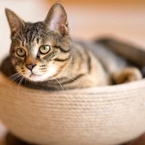 【猫cafe】イメージ