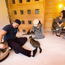 """【猫cafe】旅館では珍しい""""猫café併設!"""