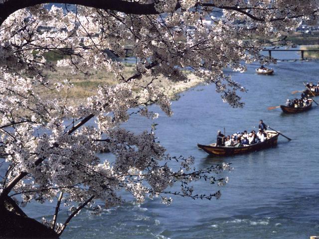 春の保津川下り