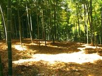 自然に囲まれた竹やぶでバーベキュー