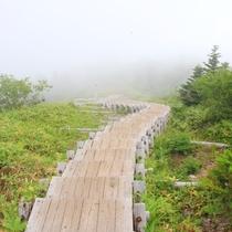 四阿山の植生保護の階段