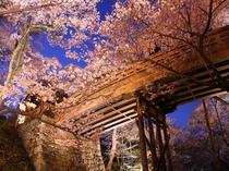 4月 高遠の夜桜