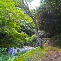 庭園の散策路