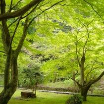 自然豊かな加満田の庭園