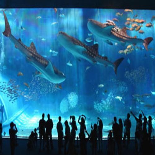 【観光施設】美ら海水族館/巨大水槽パネル