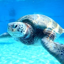 【観光施設】美ら海水族館イメージ