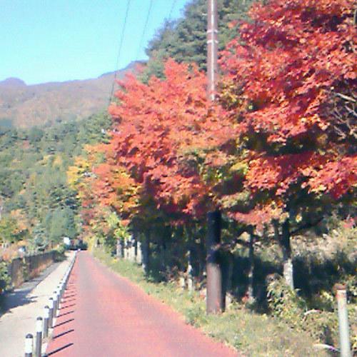 色づく紅葉。例年見頃は11月中旬です。(写真はイメージです)