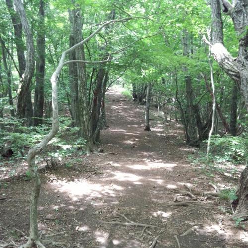トレッキング/簡単なトレッキングコースから樹海遊歩道散策まで!