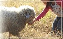 ローザンベリー多和田 羊