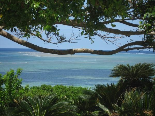 やんばるは木陰に入ると涼しかったりします!この海の眺め・・・