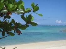 青い海と真白な砂が印象的な天然ビーチ!