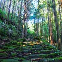 世界遺産『熊野古道』散策へ