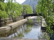 大谷川の柳