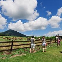 【周辺】ジャージーランド☆大自然を感じて頂ける場所です。