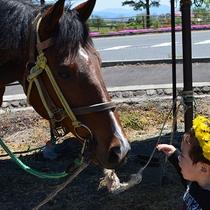 【周辺】ホースパークではお子様も安心して引き馬・乗馬ができます。